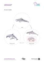 Life Cycles Activity Worksheet 6 Dolphin